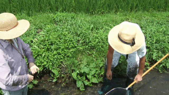解決!田舎で田んぼを借りる方法。自給したい移住者と初心者向け。