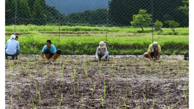 自然農法をやってわかった、たったひとつの大切な事