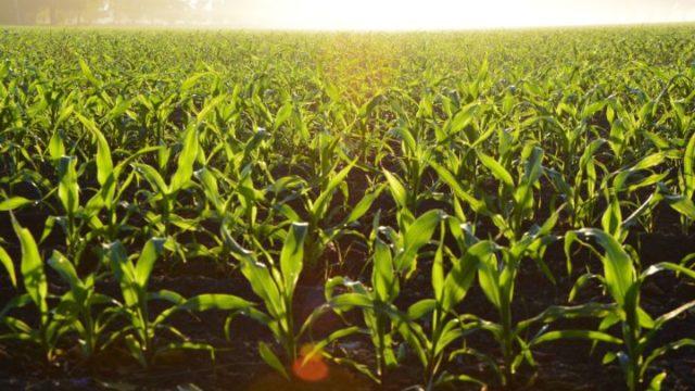 【初心者必見!】基礎から学べる家庭菜園におすすめの農法は?
