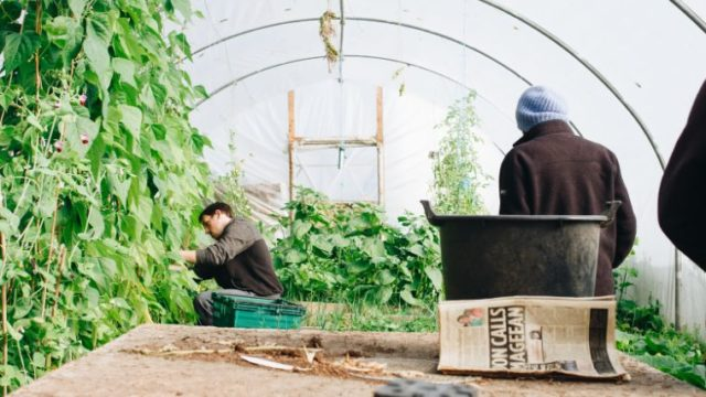 【2020年最新版】田舎暮らしの仕事ベスト3<移住者が選ぶのには理由がある!>