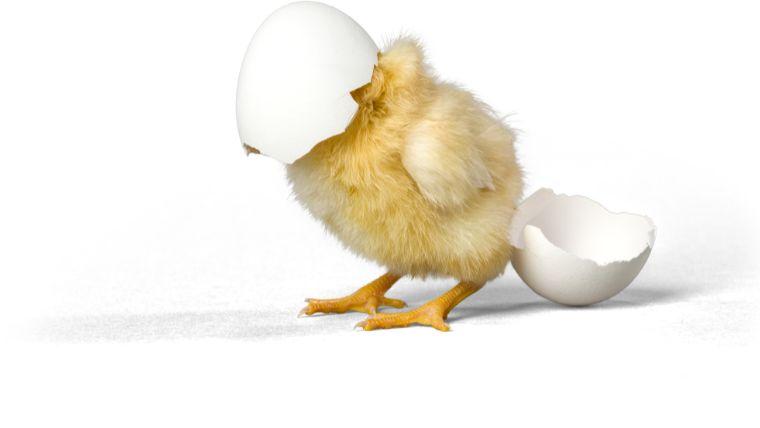 【長持ちするDIY!】鶏小屋の作り方<鶏の飼育環境を知る!編>